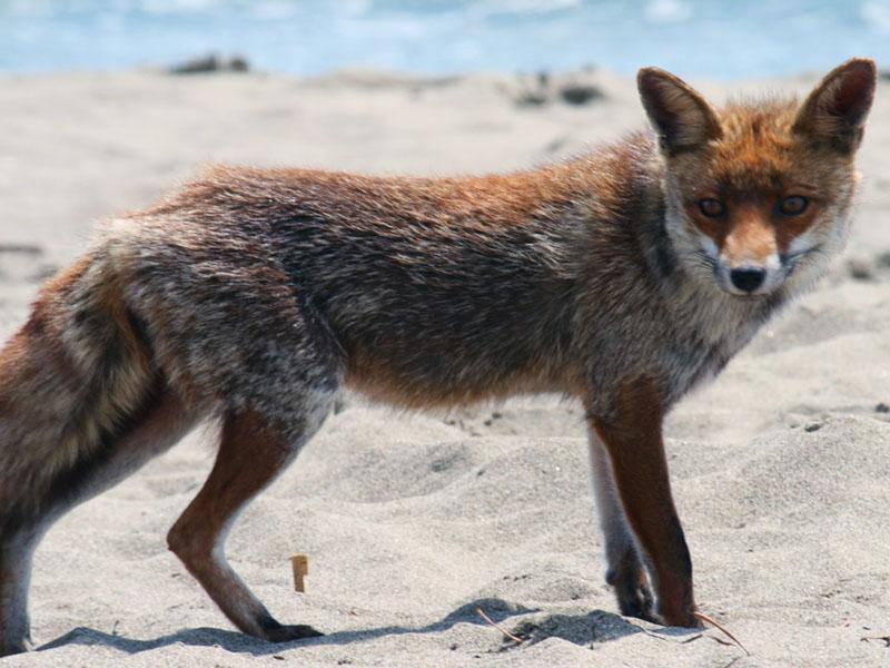 parco naturalistico della maremma animali trekking agriturismo poggio al vento